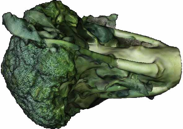Broccolli Textured