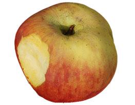 apple_model